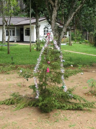 Forest Paradise - Ella:                   Christmas tree in the garden