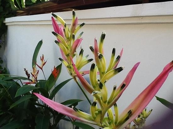 Pertiwi Resort & Spa:                   flowers at our pool villa