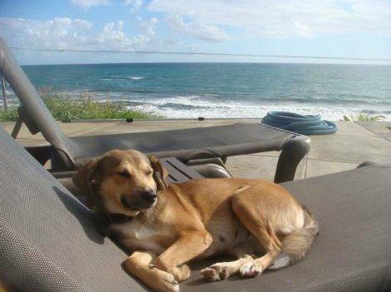 Pagua Bay House Oceanfront Cabanas: La belle vue!
