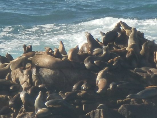 Point Lobos State Reserve: Seals sunning on the rocks