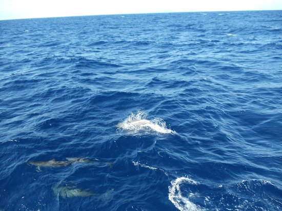 Captain Mike's - Sports Fishing and Whale Watching Tours:                   Dolphins