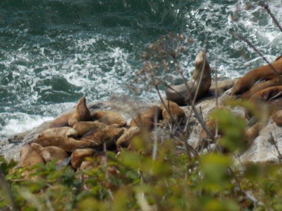Sea Lion Caves: More lions