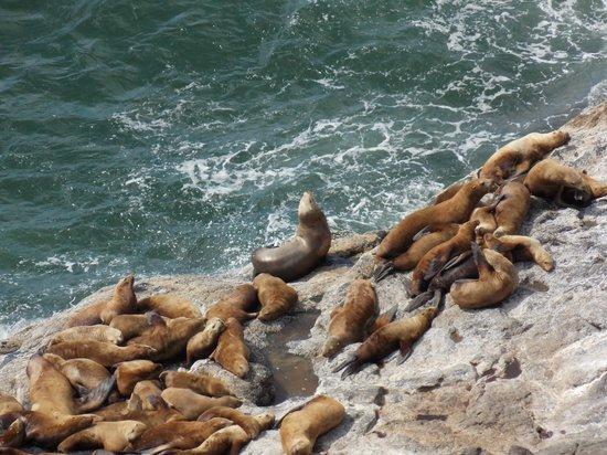 Sea Lion Caves: Little less zoom