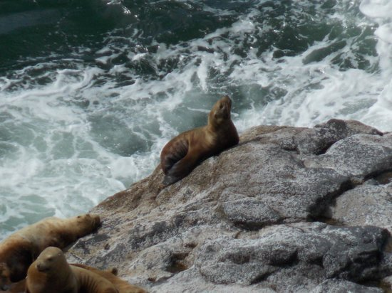 Sea Lion Caves: Need a decent zoom on your camera