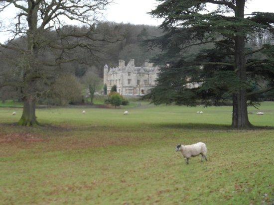 Dumbleton Hall Hotel:                   view from the Drive