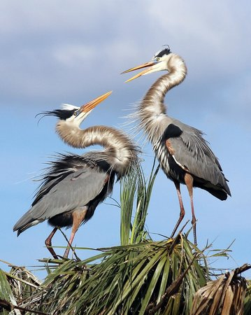 Ritch Grissom Memorial Wetlands :                   Greeting