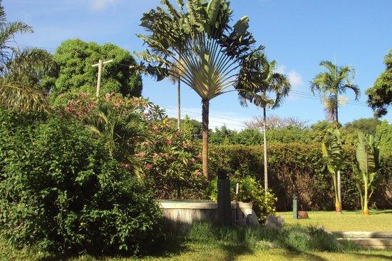 Mwembe Resort: parco intorno alla piscina principale