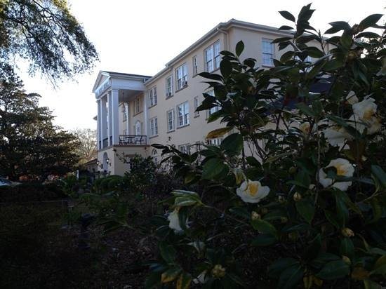 New Perry Hotel:                   camellias blooming in January