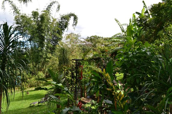 Pura Vida Hotel:                   view of the property