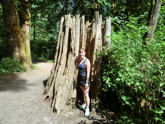 Silver Falls State Park:                   Along the trail, lots of good photo-ops