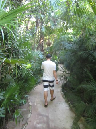 Viceroy Riviera Maya:                   path leading to our room
