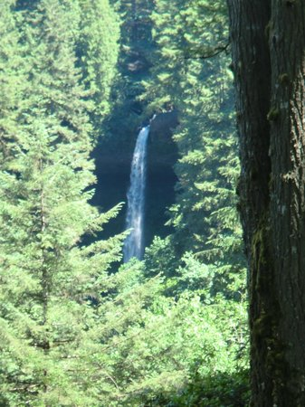 Silver Falls State Park :                   Views of falls we already passed from the back side of the loop