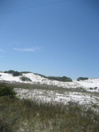 Grayton Beach State Park:                   The Dunes