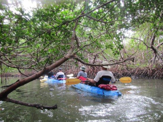 Adventures Kayaking: .