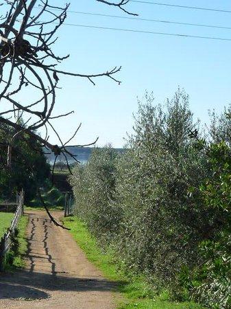 Fattoria Il Casalone: Sentieri Agriturismo Casalone Toscana