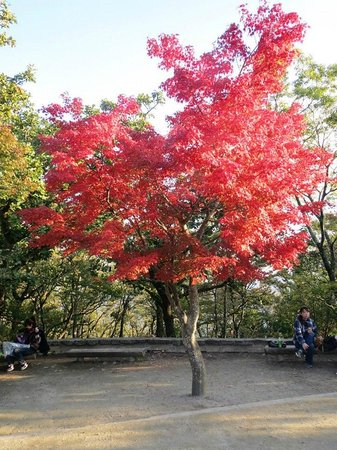 Mt. Takao: Fall Foliage
