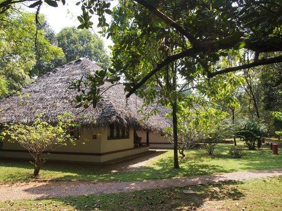 Marari Beach Resort:                   thatched cottages