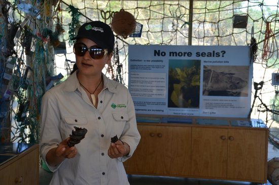 Kangaroo Island Odysseys: Mia ci mostra le uova di alcuni squali