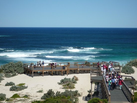 Kangaroo Island Odysseys: La spiaggia dei leoni marini