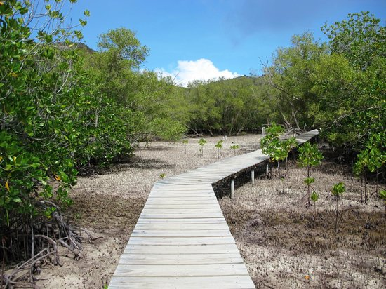 Curieuse Island: Mangroves forest