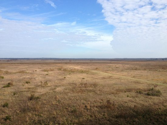 Paynes Prairie Preserve State Park: The prairie from the 50-foot observation tower.