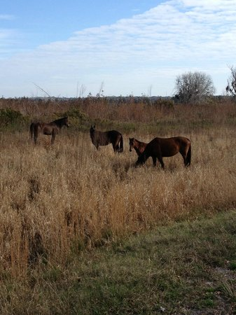 Paynes Prairie Preserve State Park: Group of wild horses encountered on trails