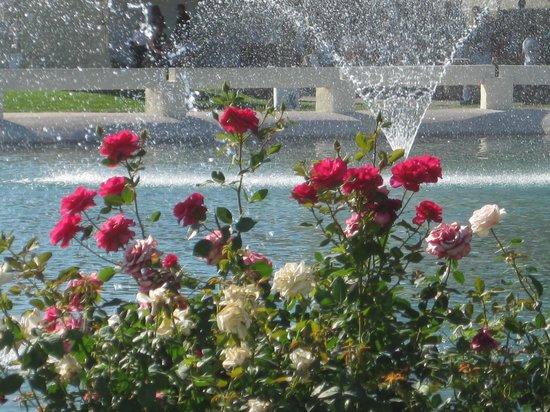 Scottsdale Civic Center:                   Roses & more roses