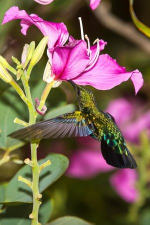 St. Lucian by Rex Resorts:                                     Hummingbird in hotel grounds