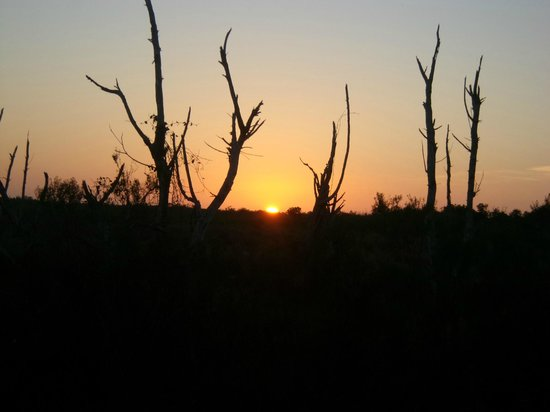 Collier Seminole State Park: Sunset
