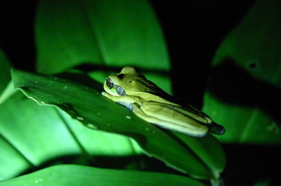 Namuwoki Lodge: Frog by pool