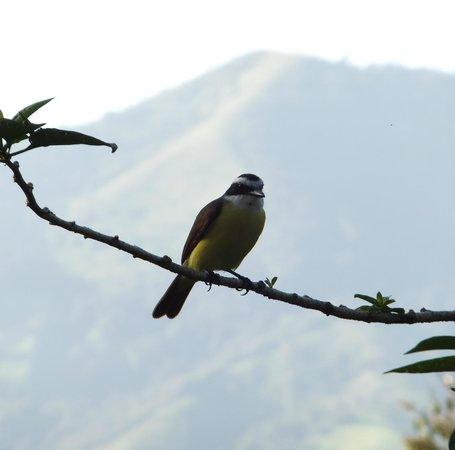 Villa Decary:                   Beautiful bird