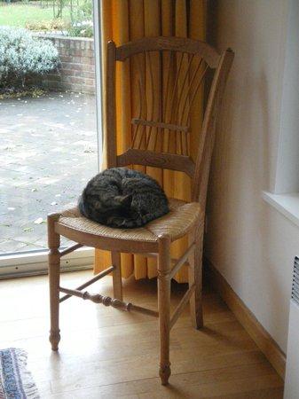 A la Maison du Heron : il gatto