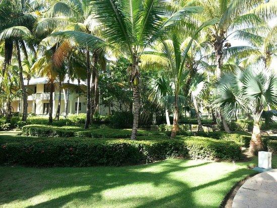 Paradisus Punta Cana: Lush Oasis