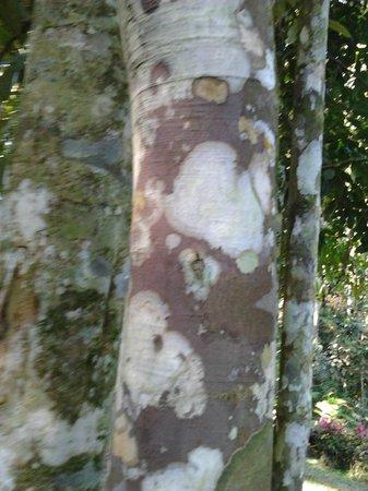 Taman Botani Negara Shah Alam: look at the textures