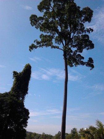 Taman Botani Negara Shah Alam: tree nearby cactus garden