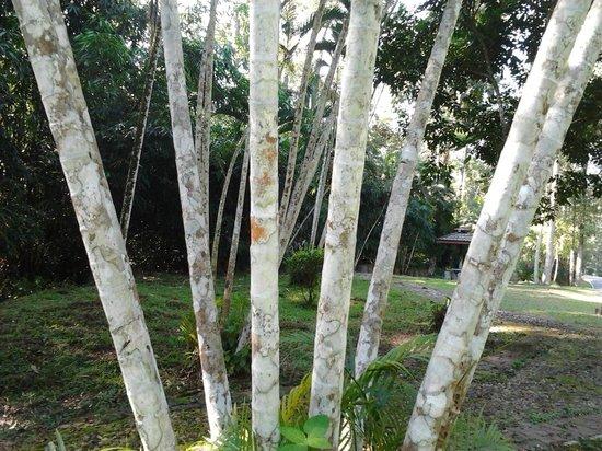 Taman Botani Negara Shah Alam: textures
