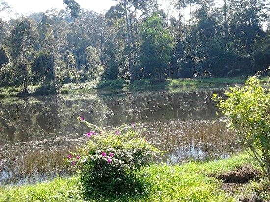 Taman Botani Negara Shah Alam: pool