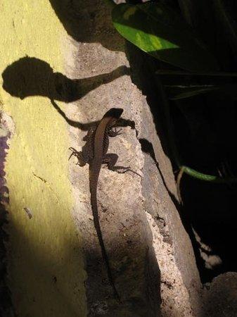 Los Naranjos Retreat:                   gecko soaking up the sun at Los Naranjos                 