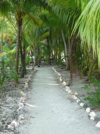 Glover's Atoll Resort: chemin