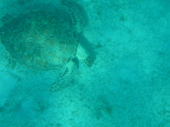Post Time Charters: Sea Turtles!