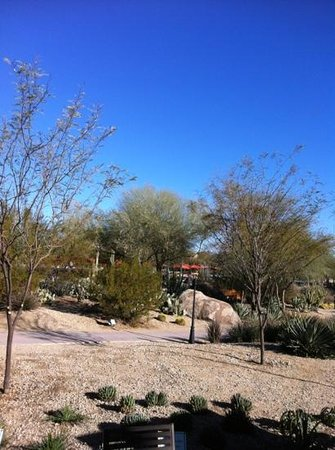 JW Marriott Phoenix Desert Ridge Resort & Spa:                   the grounds are special