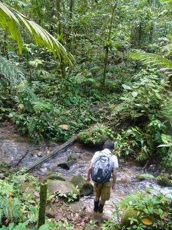 Chachagua Rainforest Eco Lodge:                   a trail in the hotel