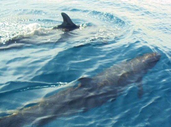 Cano Island:                   pseudo killer whales