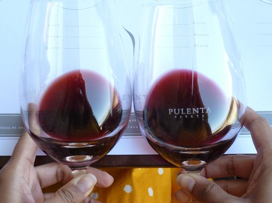 Ampora Wine Tours:                   Comparing wines at Pulenta