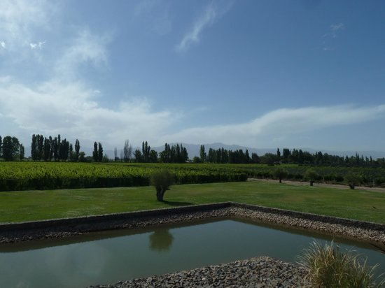 Ampora Wine Tours:                   Another winery in Mendoza