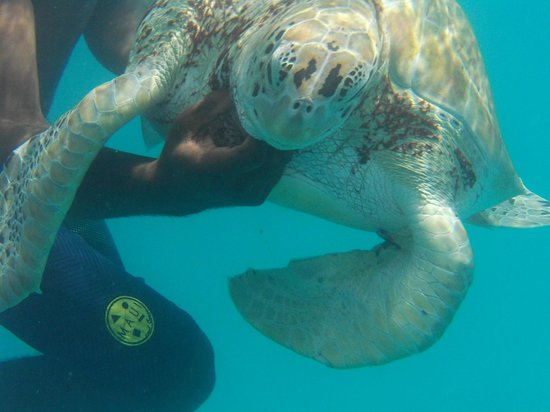 Dover, Μπαρμπάντος: Catamaran trip to swim with turtles. Amazing experience!