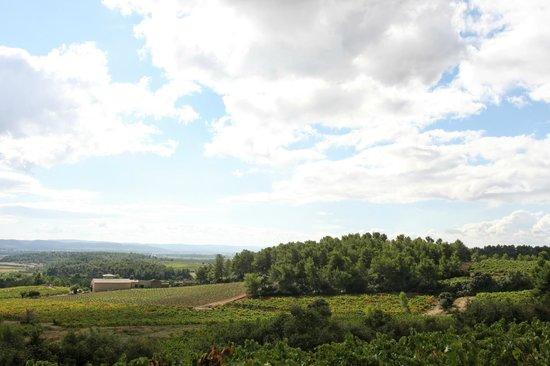 Le vignoble du Château Tourril