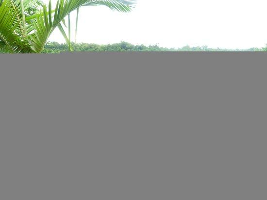 Costa del Sol Iguazu: vista desde el jardín de cañafistola