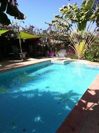 Hotel L'Eden du Pescadou : La piscine de l'eden du pescadou