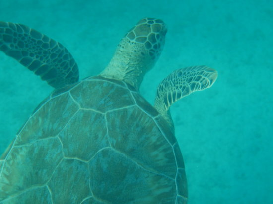 Water Island, St. Thomas: Swim with the turtles